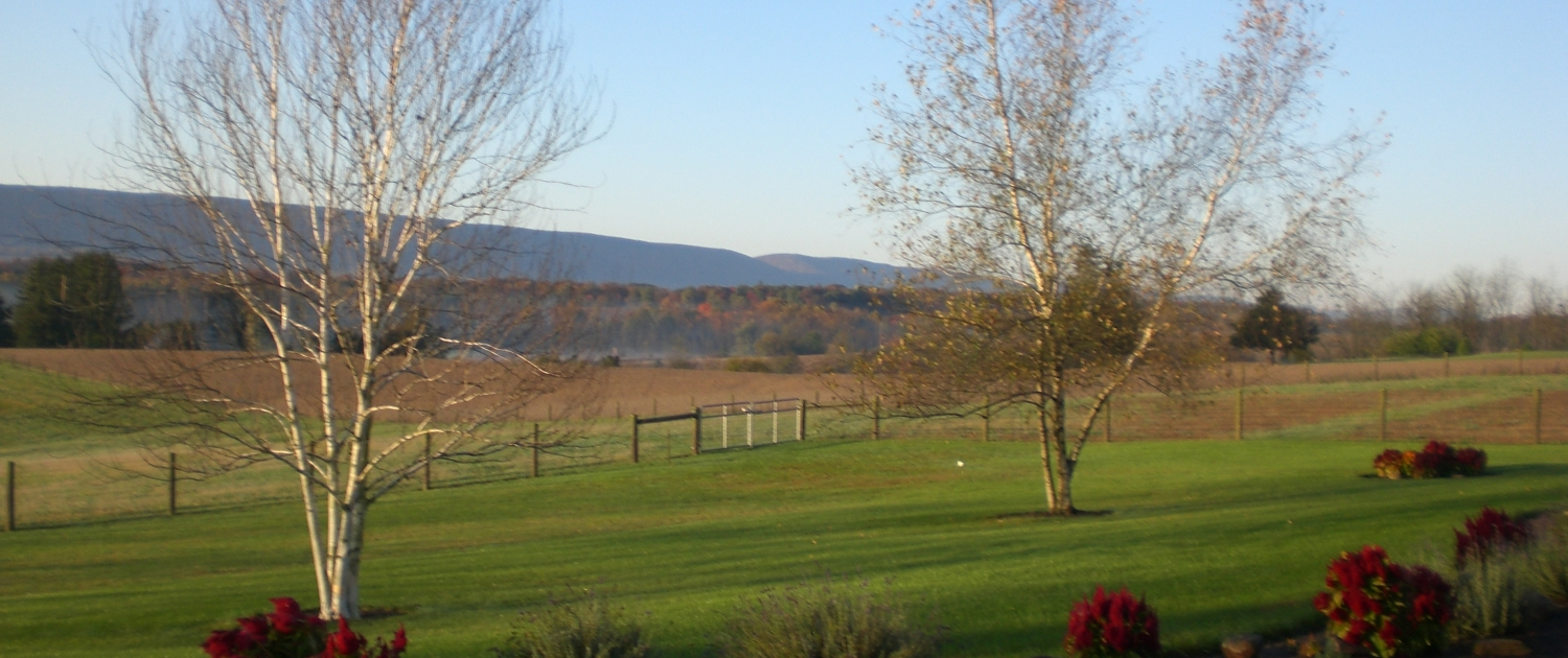 A view of Golden Harvest Acres. In the foreground is a gravel driveway lined with flowers, rocks and small shrubs. In the middle ground is a green lawn with two trees. It is spring so the trees are mostly bare. Beyond the yard is a post and wire fence and a metal gate. Beyond the fence is a patchwork of fields and forest. In the background are small, sloping mountains.