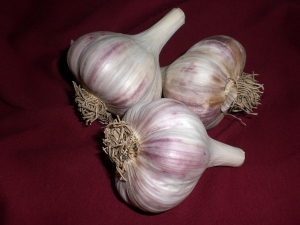 Three bulbs of garlic lay together on a red, cloth background. The bulbs are large and white with purple striping. The bulbs have their stalks and roots trimmed.